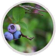 Blueberries On The Vine 4 Round Beach Towel