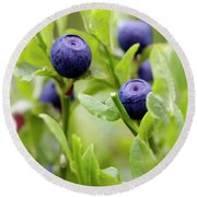Blueberry Shrubs Round Beach Towel