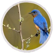 Bluebird Bliss Round Beach Towel