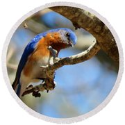 Bluebird Curiousity Round Beach Towel