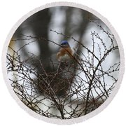 Bluebird In Briars Round Beach Towel
