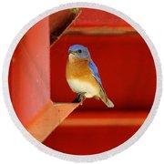 Bluebird On Red Round Beach Towel