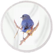 Bluebird On White Round Beach Towel