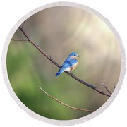 Bluebird Perched On A Tree Branch In The Sunlight Round Beach Towel