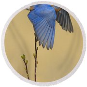 Bluebird Takes Flight Round Beach Towel