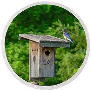 Bluebird With Grub Round Beach Towel