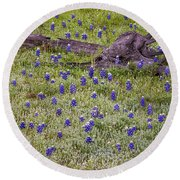 Bluebonnets And Fallen Tree - Texas Hill Country Round Beach Towel
