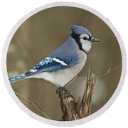 Bluejay 012 Round Beach Towel