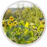 Bluejay And Sunflowers Round Beach Towel