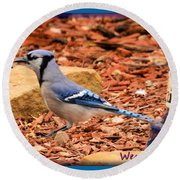 Bluejay Profile Round Beach Towel