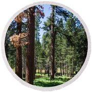 Bluff Lake Ca Fern Forest 3 Round Beach Towel