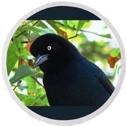 Boat Tailed Grackle Close Up Round Beach Towel