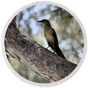 Boat - Tailed Grackle  Round Beach Towel
