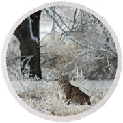 Bobcat And Heavy Frost Round Beach Towel