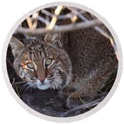 Bobcat Round Beach Towel