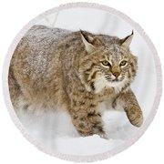 Bobcat In Snow Round Beach Towel