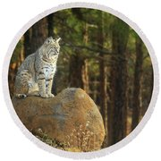 Bobcat Thoughts Round Beach Towel