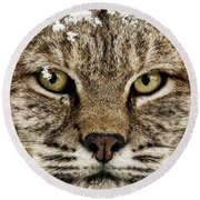 Bobcat Whiskers Round Beach Towel