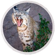 Bobcat Yawn Round Beach Towel
