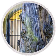 Boboli Garden Ancient Tree Round Beach Towel