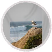 California Gull 2 - Bodega Head Sentinel  Round Beach Towel