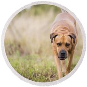 Boerboel Dog Round Beach Towel
