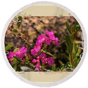 Bog Laurel Flowers Round Beach Towel
