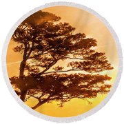Bonsai Pine Sunrise Round Beach Towel