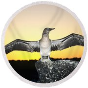 Booby At Sunset Round Beach Towel