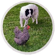 Border Collie Herding Chicken Round Beach Towel