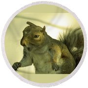 Bossy Squirrel Round Beach Towel