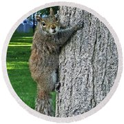 Boston Common Squirrel Hanging From A Tree Boston Ma Round Beach Towel