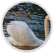 Boston Public Garden Swan Amongst The Ducks Ruffled Feathers Round Beach Towel