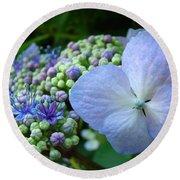 Botanical Garden Blue Hydrangea Flowers Baslee Troutman Round Beach Towel