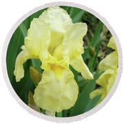 Botanical Yellow Iris Flower Summer Floral Art Baslee Troutman Round Beach Towel