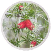 Bottlebrush Round Beach Towel