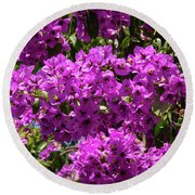 Bougainvillea Blooms Round Beach Towel