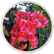 Bougainvillea On Southern Fence Round Beach Towel