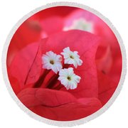 Bougainvilleas And White Round Beach Towel