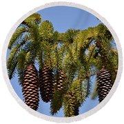Boughs Of Pine Cones Round Beach Towel