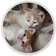 Box Full Of Kittens Round Beach Towel by Garry Gay