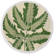 Brake Fern Round Beach Towel