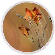 Branch Of Autumn Round Beach Towel