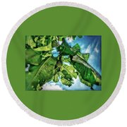 Branch With Green Fruit Round Beach Towel