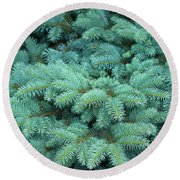 Branches Of Blue Spruce Round Beach Towel