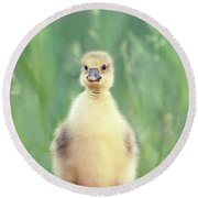 Brave New Baby - Gosling Ready To Conquer The World Round Beach Towel