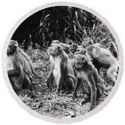 Brazil: Monkeys Round Beach Towel