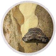 Brazilian Moth In Juiz De Fora Round Beach Towel