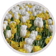 Breathtaking Field Of Blooming Yellow And White Tulips Round Beach Towel
