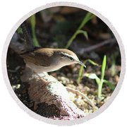 Breswick Wren On Tree Root 2 Round Beach Towel